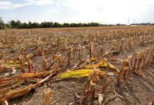 Meteorologists in Europe record severe drought