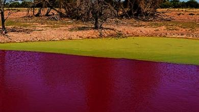 Paraguay the lake