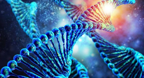 Scientists first determined the sequence of human chromosomes