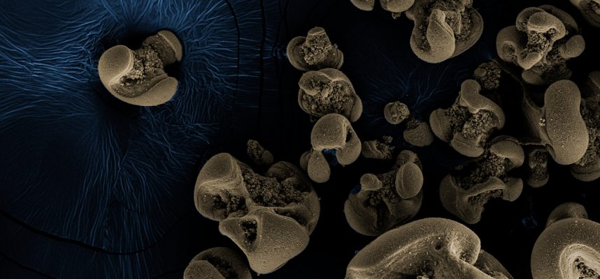 Scientists have discovered bacteria that feed on metal