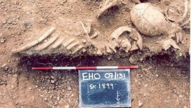 Vikings spread smallpox