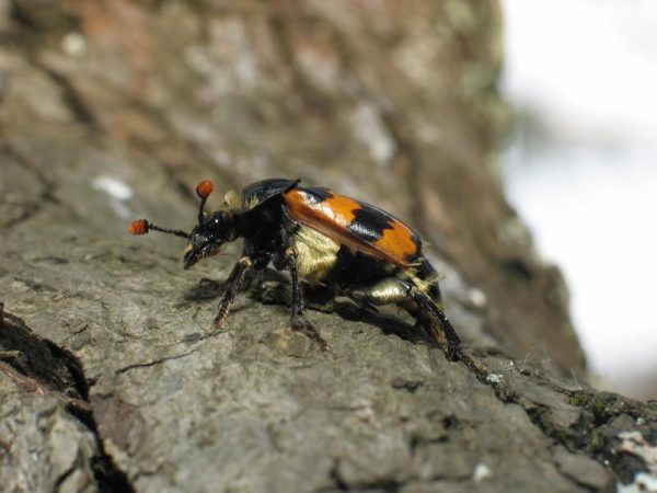 Why beetles are homosexual