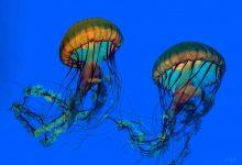 people among jellyfish 3