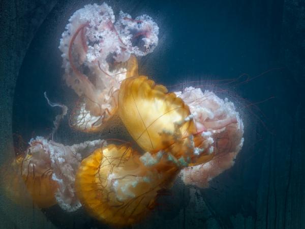 people among jellyfish