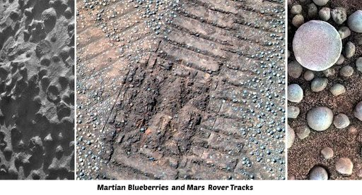 there are mushrooms and lichens on Mars 2