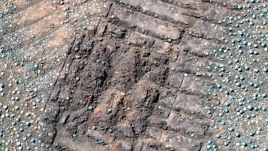 Photo of Scientist: there are mushrooms and lichens on Mars