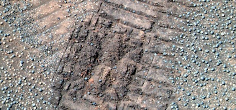 there are mushrooms and lichens on Mars