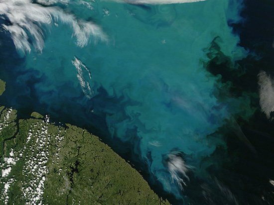 unusual water bloom has been recorded in the seas of the Arctic Ocean