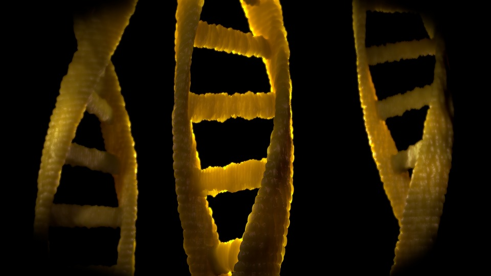 what will happen to men if the Y chromosome disappears from people