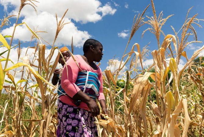 zimbabwe hunger 900 jekesai njikizana afp getty