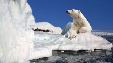20 facts about the North Pole that not everyone knows