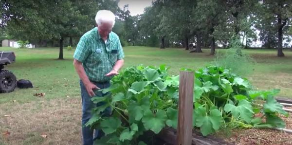 American farmer reveals that he grew from mysterious seeds from China