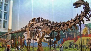 Distant human ancestors ate dinosaurs