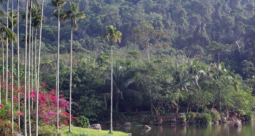 Hainan rainforest