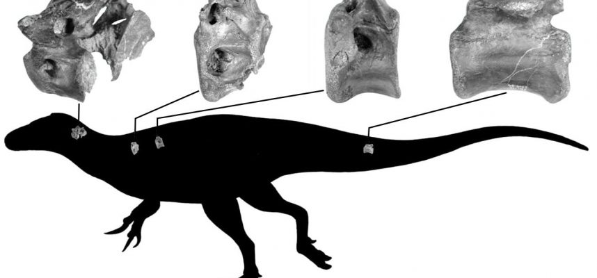 Paleontologists have discovered a new species of dinosaurs