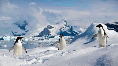 The disappearance of penguins and the melting of glaciers