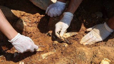 Traces of the oldest cremation found in Israel