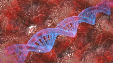 Traces of unknown species found in modern human DNA