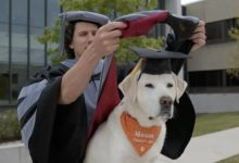 What professions can animals learn