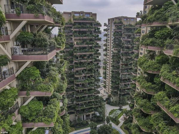 Chinese project of a residential complex with a vertical forest failed