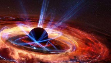 Expert black holes destroy information