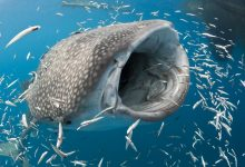 The largest fish in the world