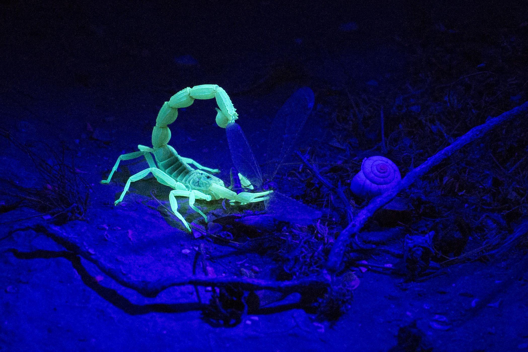 scorpion invasion