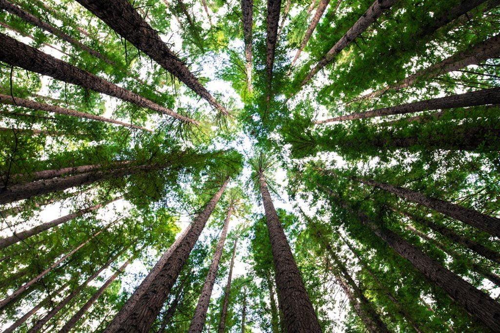 trees 1 1024x682 1