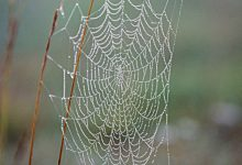 Cobweb structure used for three dimensional vision
