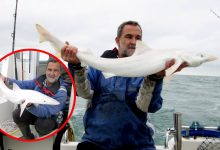 Rare albino shark caught off UK coast