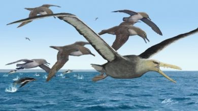 Remains of giant toothy birds found in Antarctica
