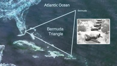 The mystery of the disappearance of five torpedo bombers in the Bermuda Triangle revealed