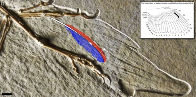 Who owned the oldest surviving feather