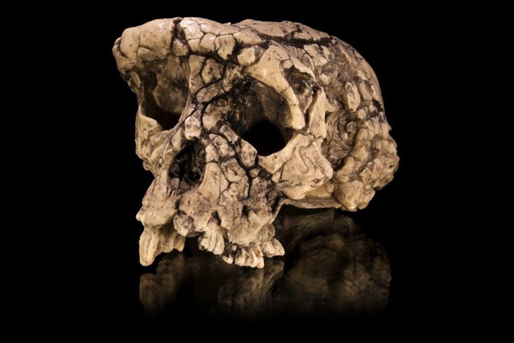 7 million years old humanoid creature identified