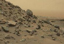 Evidence of survival of terrestrial microorganisms found on Mars