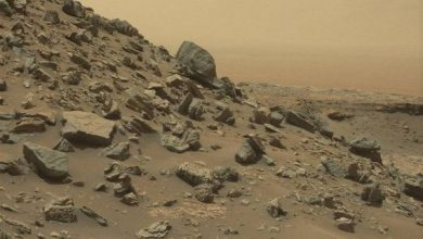 Evidence of survival of terrestrial microorganisms found on Mars
