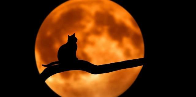 Lunar calendar for November 2020