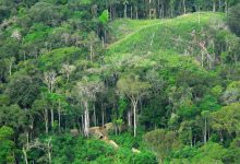 Amazon forests