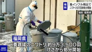 Avian influenza recorded in 10 prefectures of Japan 2 5 million chickens killed