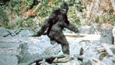 Bigfoot has polar bear DNA