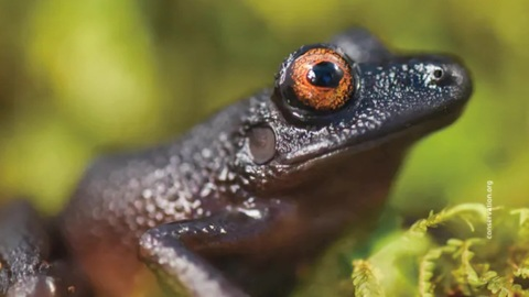 Bolivia found 20 new species of animals and plants