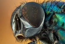 Mysterious new mushroom turns flies into zombies by eating them alive