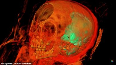 X rays reveal what is inside the 1 900 year old Egyptian mummy