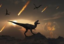 Dinosaur remains can be found on the Moon or Mars