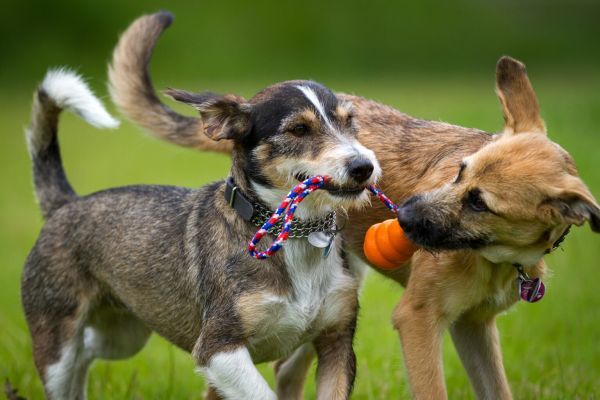 Dogs were able to quickly memorize new words