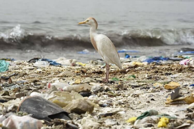 Environmental pollution poses one of the most serious threats not only to wildlife but also to us
