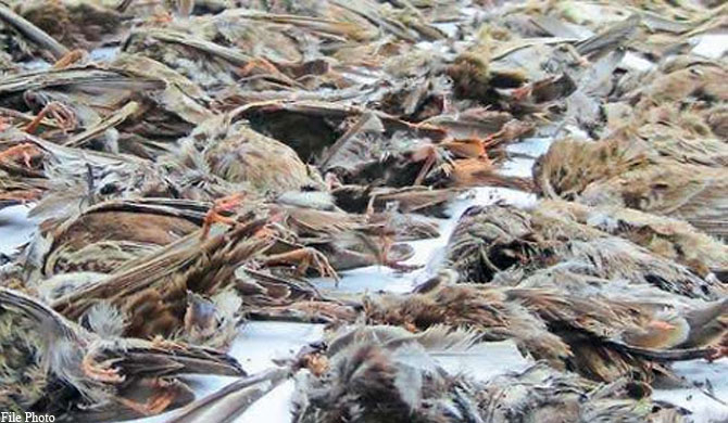 Hundreds of dead birds fall from the sky in Sri Lanka