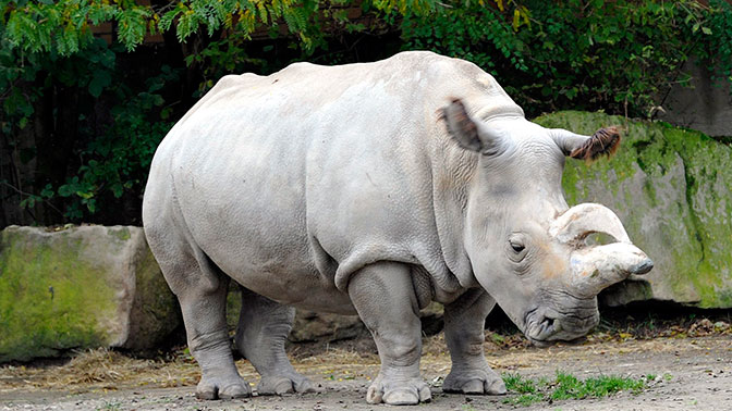 Reuters scientists create two more northern white rhino embryos