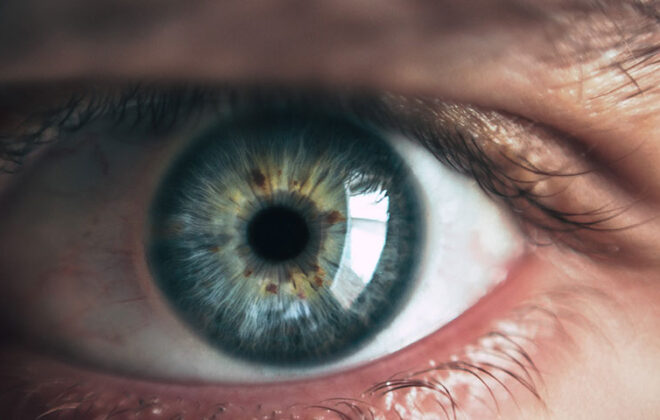 Scientists can regenerate their own retina