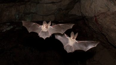 Scientists from Wuhan admit they were bitten by infected bats